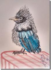 Painting Juvenile Steller